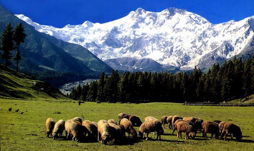 North ( Rakhiot ) Face of Nanga Parbat from Fairy Meadows