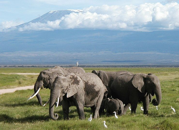 Mount Kilimanjaro from Amboseli National Park in Kenya in East Africa